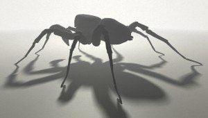 Pardosa Proxima 3D Gegenlicht, Identisch und doch Grundverschieden, ikonaut