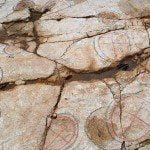 Paléoskop – fossile Dinosaurierfährten