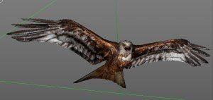 Rotmilan frontal, birdly, ikonaut