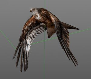 Rotmilan Low Poly Modell 3D, birdly, ikonaut