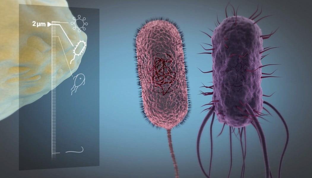 Zoom Mikroorganismen