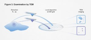 ETH, Examination by TEM, einzelzell-extraktion, ikonaut
