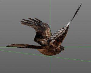 Rotmilan Seitenansicht, birdly, ikonaut