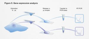 ETH, Gene expression analysis, einzelzell-extraktion, ikonaut