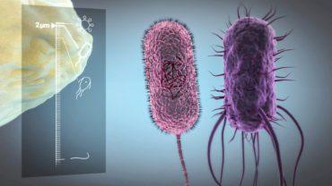 EAWAG Mikroorganismen, trinkwasser, ikonaut