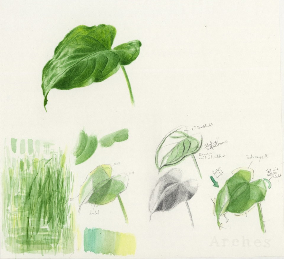 Aronstab, aurum, Pflanzenstudien, ikonaut