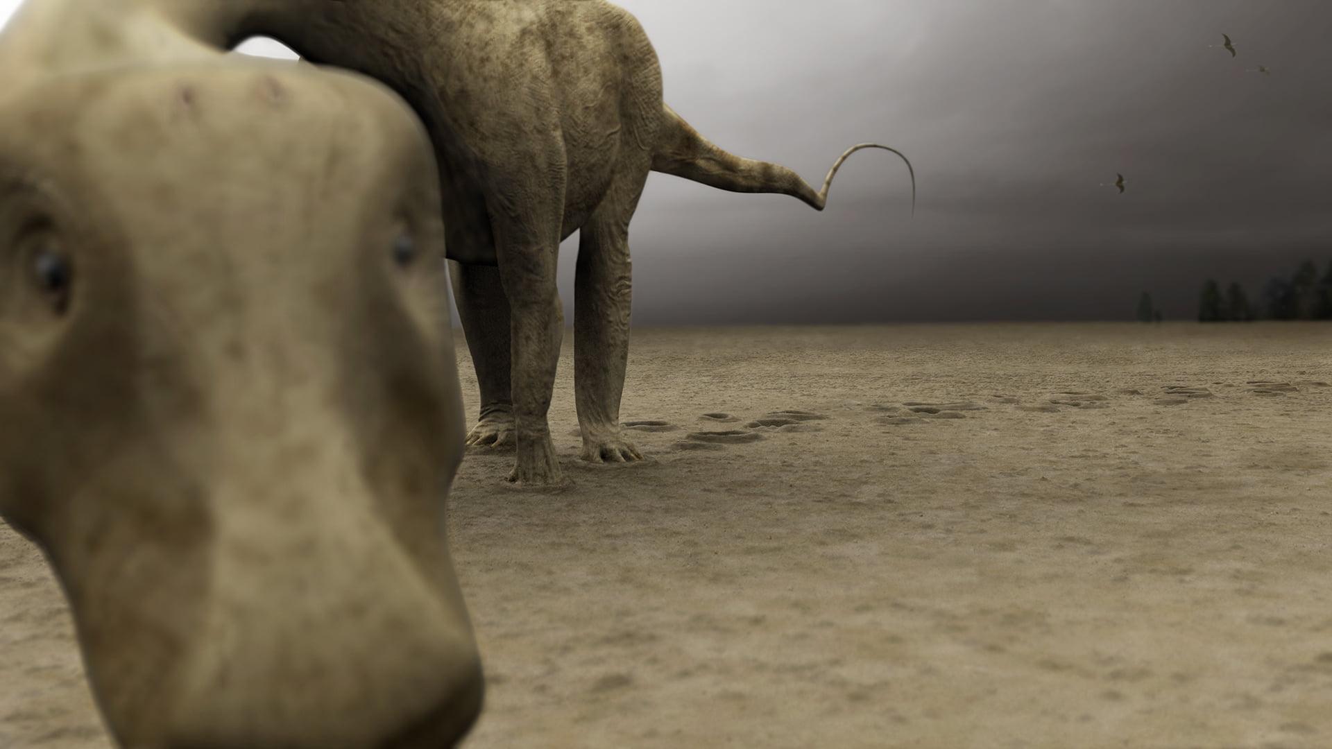 Wildwechsel – erste Fährte, Diplodocus