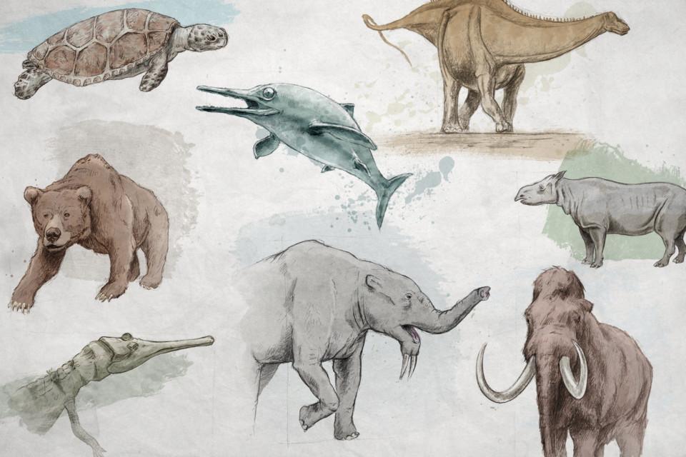 Fossile du Mois, ikonaut