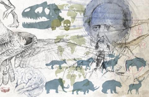 Paléoskop – Illustrationen und Grafiken