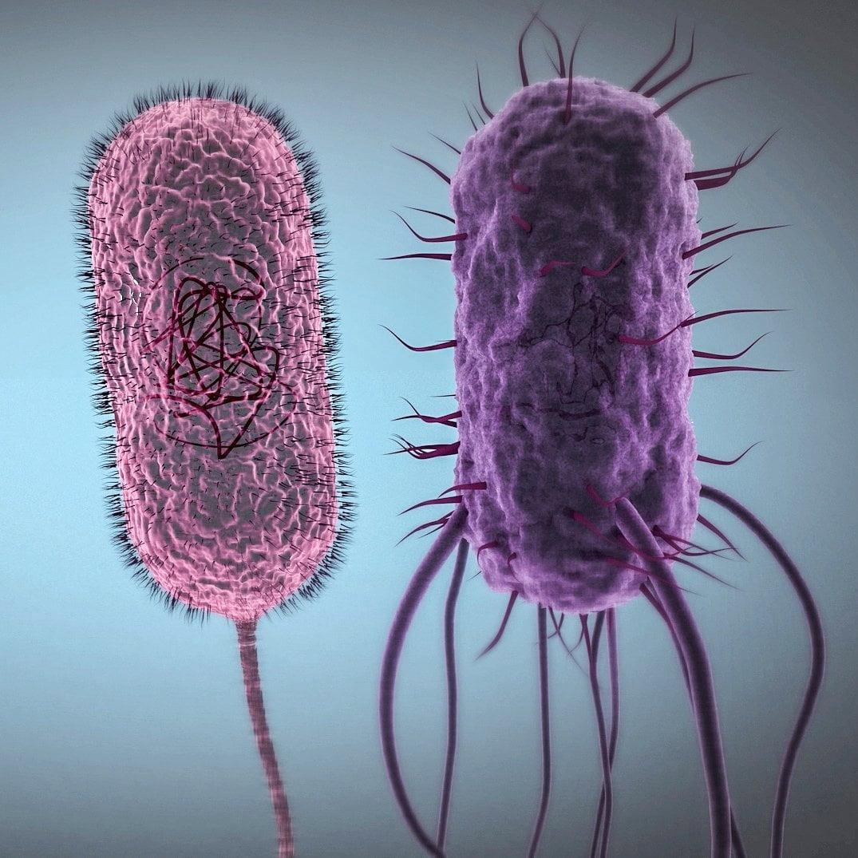 EAWAG, Mikroorganismen, Zoom, ikonaut